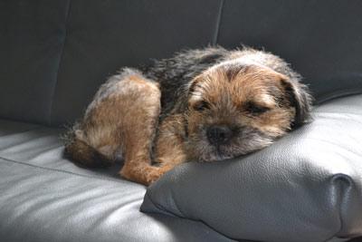 Papa Findus nutzt die Zeit und ruht sich derweil auf dem Sofa etwas aus