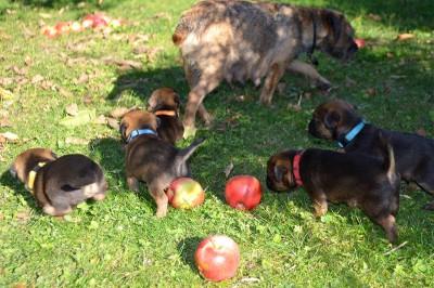 Alle mal mitkommen, jetzt werden Äpfel gelesen!