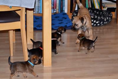 Ehrlich, du willst mit uns spielen? - Super!... ;-))